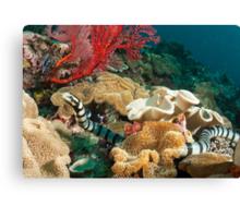 Banded Sea Krait off Port Moresby, Papua New Guinea Canvas Print