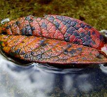 The fallen leaf by Paul Martin