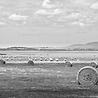 Hay Bales - B&W by Will Hore-Lacy