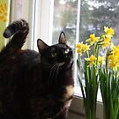 Cat and Daffodils by CitC