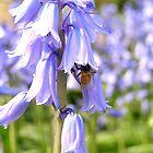 Bee#4 by minnie93