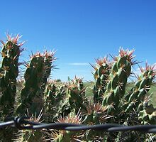 Cactus and Barbed Wire by Elizabeth Stevens