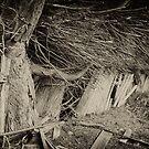 Picket Fence by Steve Lovegrove
