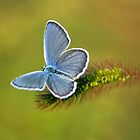 grey butterfly by davvi