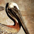 Brown Pelican  by Phillip  Judy