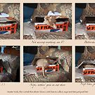 cat calendar #9 Yoda montage  by Odille Esmonde-Morgan