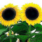 Sunflower twins by Malcolm Clark