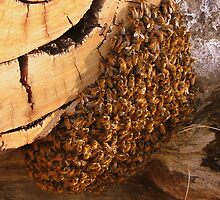 A swarm of Bees on the wood pile by bobby1
