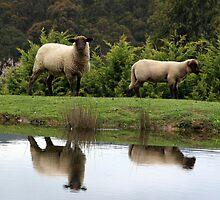 Farmyard Reflections by WendyJC