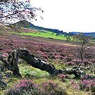 Hawnby Moor by Trevor Kersley