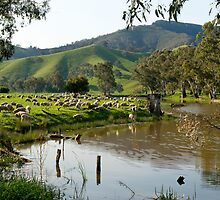 Sheep Country - Victorian Alps by Mark Elshout