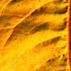 Autumn gold-leaf. by Greybeard
