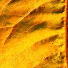 Autumn gold-leaf. by Greybeard