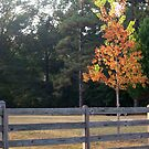 Fall and the Fence by Dan McKenzie