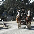 Miner In Horse & Cart - Sovereign Hill -Ballarat by judygal