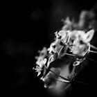 Darker than black II by AndreeaGogu
