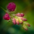 some dance in the rain ... #2 by Rosalie Dale