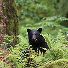 Black Bear by sarah ward