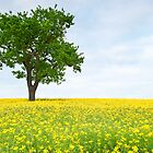 Silent tree in a vibrant meadow by macfotography