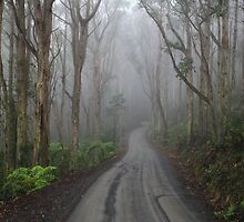 The Road to Mt Toolebewong by Donovan wilson