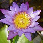 Purple Lotus flower,Bali. by Amanda Gazidis