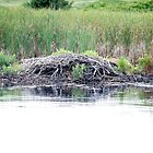 Beaver Lodge by Mark Prior