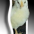 Chick..Escaping by MaeBelle