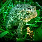 A Funny Little Frog by Linda Miller Gesualdo