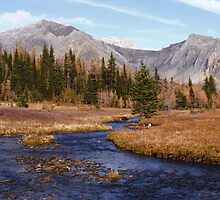 Late autumn in the Kananaskis by zumi