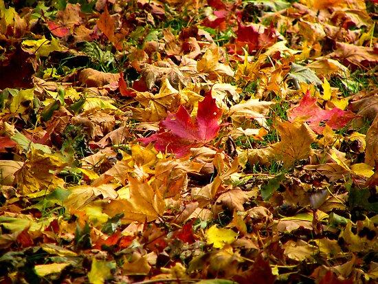 Fallen Leaves by Lucinda Walter