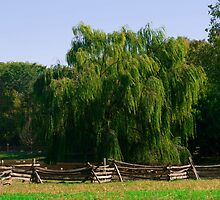 Close Up Willow Tree by weheartdogs