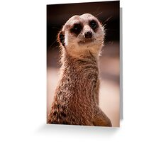 What you looking at? - Mia Cat - Adelaide Zoo Greeting Card
