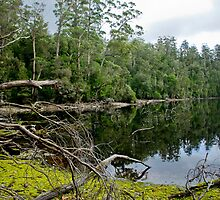 Lake Chisholm, North west Tasmania by andychiz