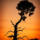 Lone Tree at Sunrise - Geoffrey Watson by BVCC