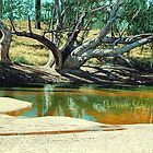 Burdekin Reflection by richard clarke