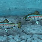 Rainbow Trout by Walter Colvin