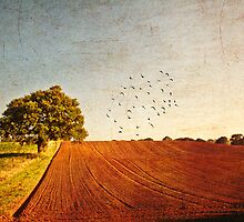 Rich Fields of Brown and Green by Paul Wilkin