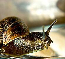 Snail #2 by Trevor Kersley