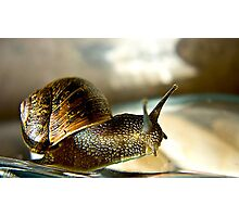 Snail #2 Photographic Print