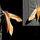 Tersa Sphinx Moth Discovery in Ocean County, New Jersey by Paul Gitto