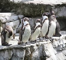 Penguins by Louiseclaire86
