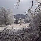 Frozen fields, Fayetteville Arkansas by David  Hughes