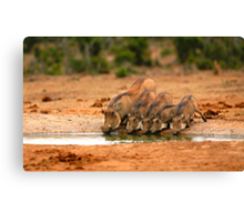 Warthog Family Canvas Print