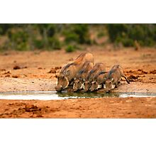 Warthog Family Photographic Print