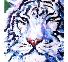 White Tiger by Maggie Keegan