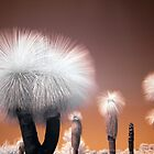 Xanthorrhoea Preissii IR I by Sean Farrow