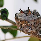 Hummingbird Nest by Steve  Buffington