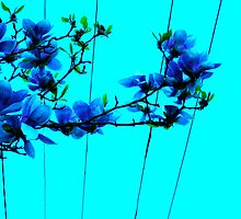 blue flower wire by Rosalinde Jewell