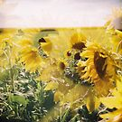holga sunflowers by redcow