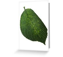 leaf #9 Greeting Card